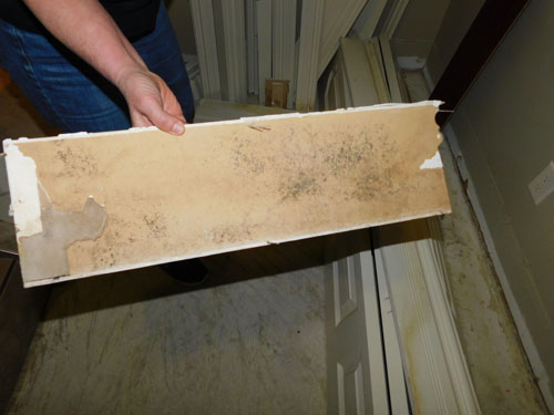 Mould Removal   Asbestos & Mould   R C  White Ltd  General