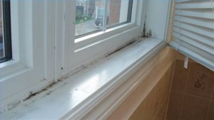 How serious a risk is mould in the home?